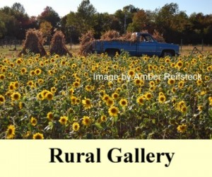 Rural Photography Gallery