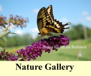 Flowers Photography Gallery