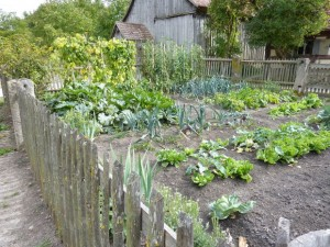 5 Reasons For Planting A Garden