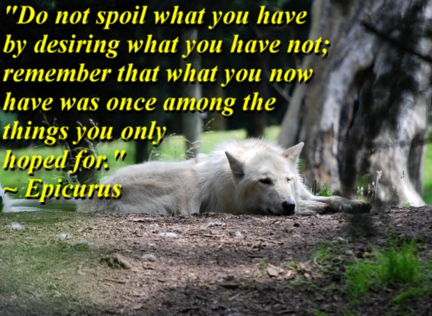 """""""Do not spoil what you have by desiring what you have not; remember that what you now have was once among the things you only hoped for."""" ~ Epicurus"""