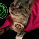 Dr. Strange Cat Costume DIY